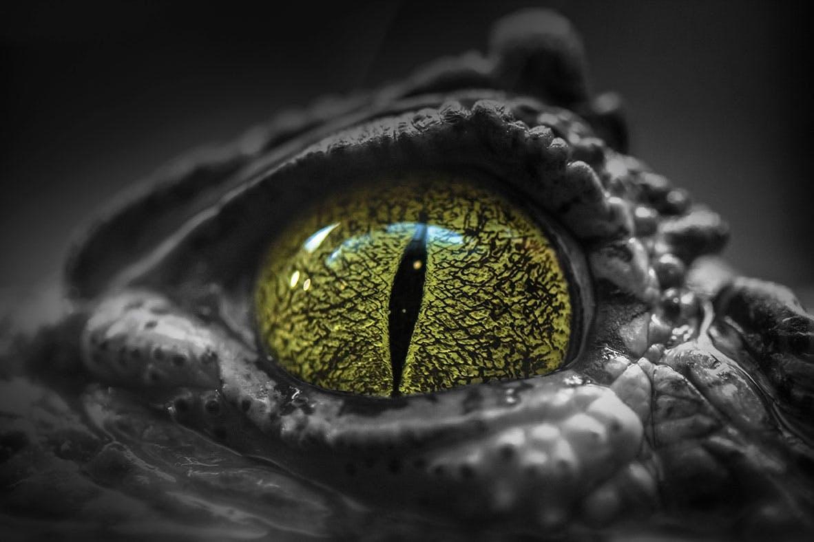 Krokodilpupill rovdjur