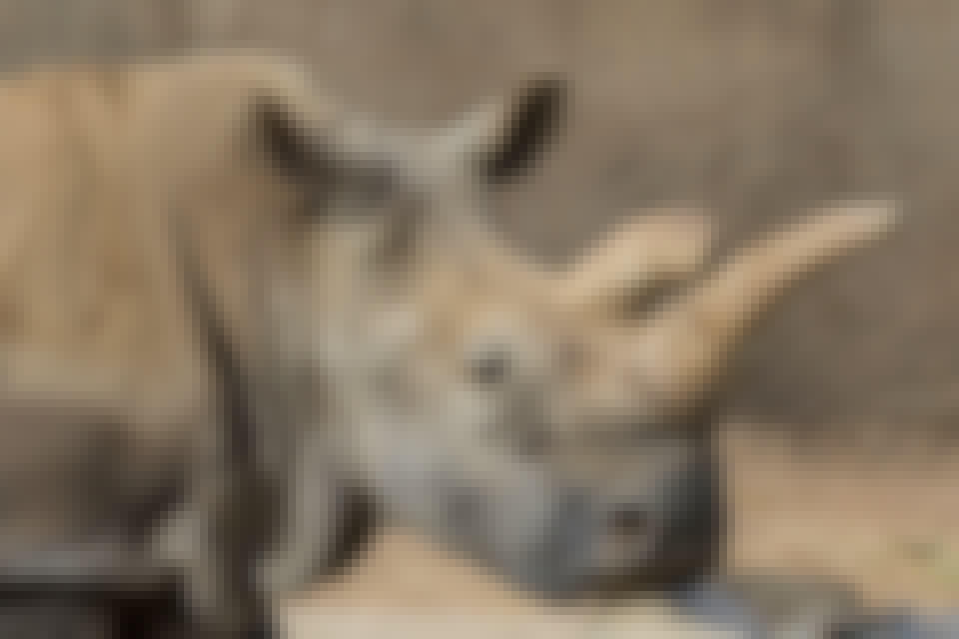 witte neushoorn Nola top