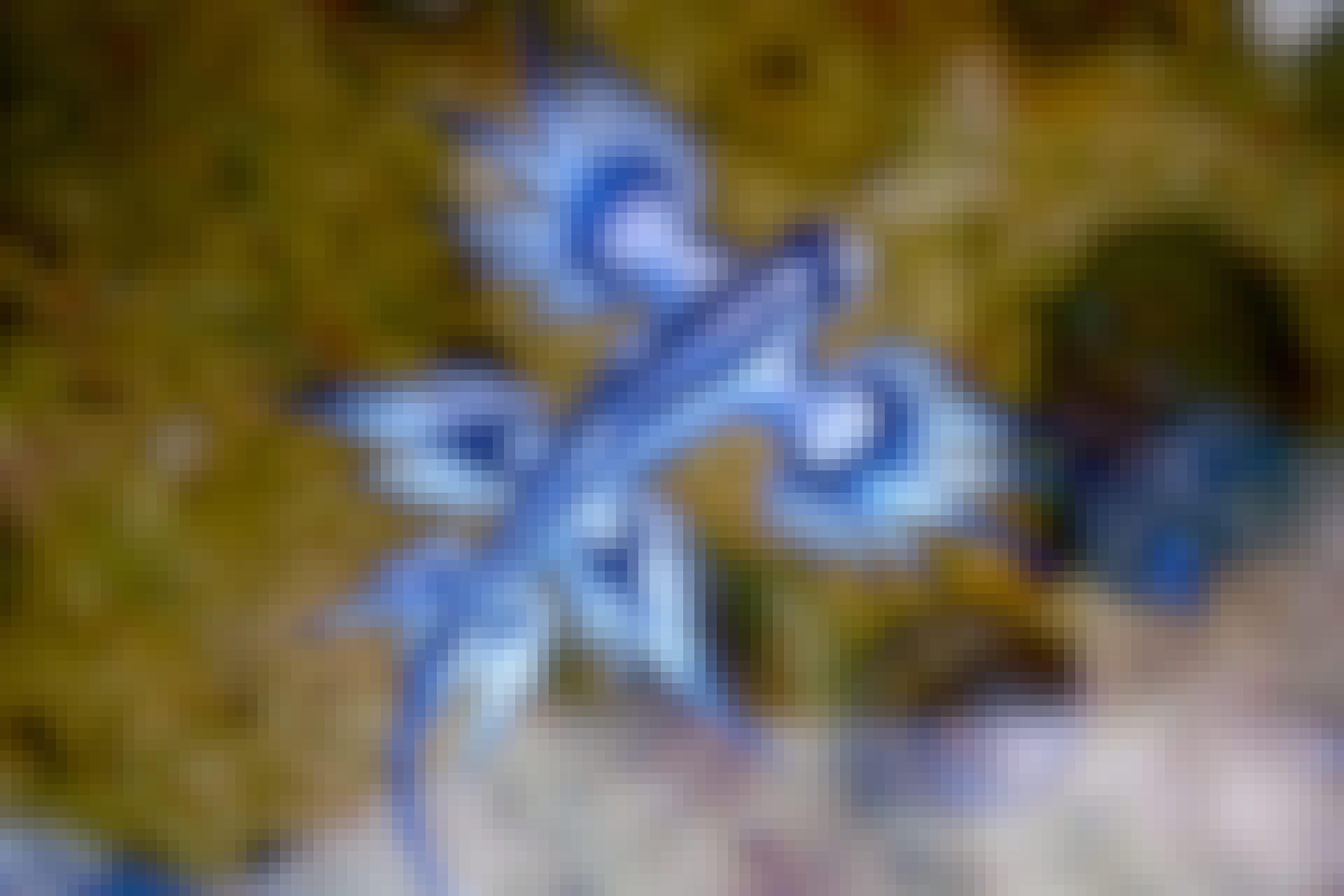 Sininen lohikäärme 1