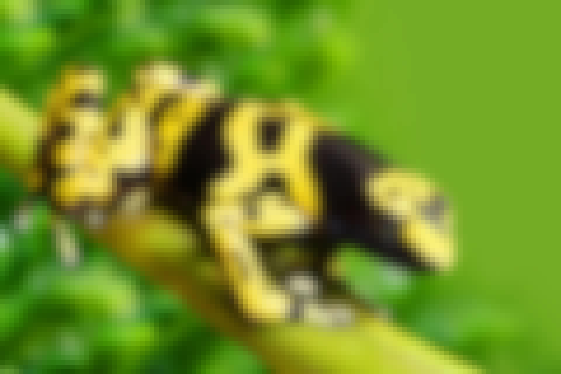 Världens giftigaste djur topp 5