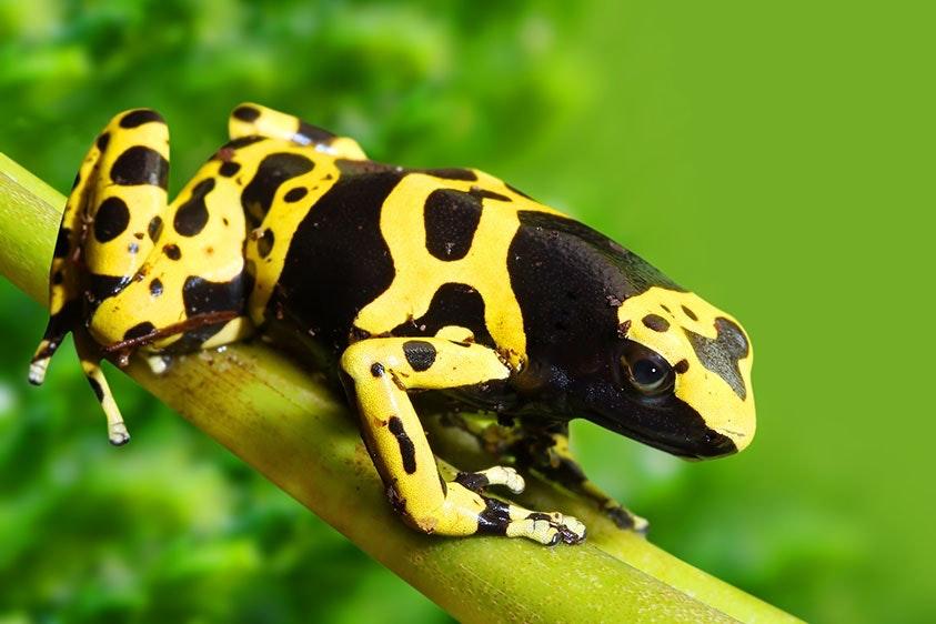 Verdens giftigste dyr top 5