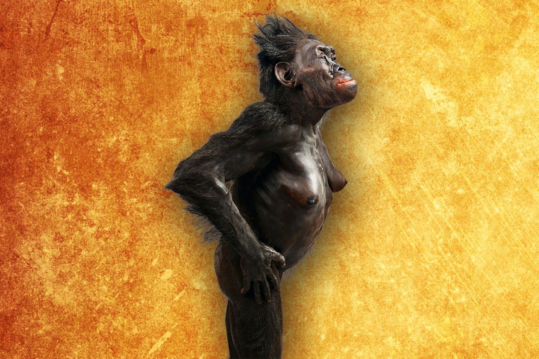 Homo-slægten Lucy