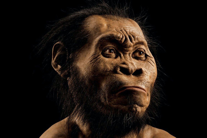 Menneskerace Homo naledi