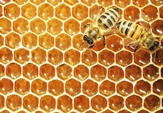 Säilyykö hunaja ikuisesti?