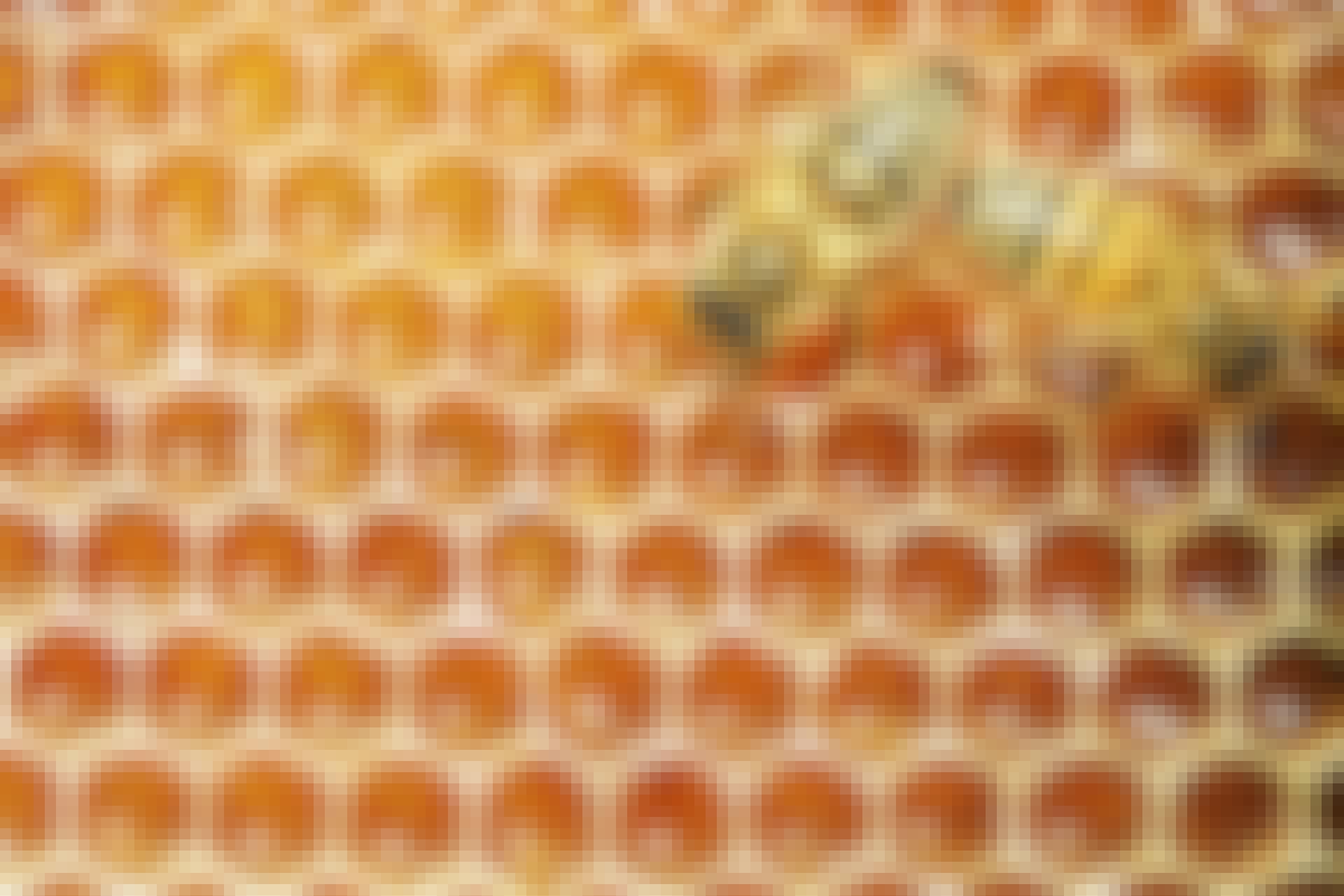 Kan honning holde evig?
