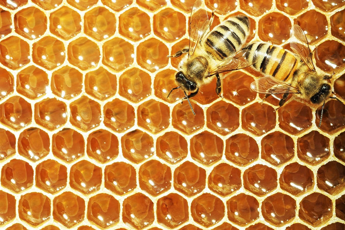 Kan honning holde evigt?