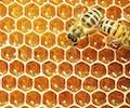 Blijft honing eeuwig goed?