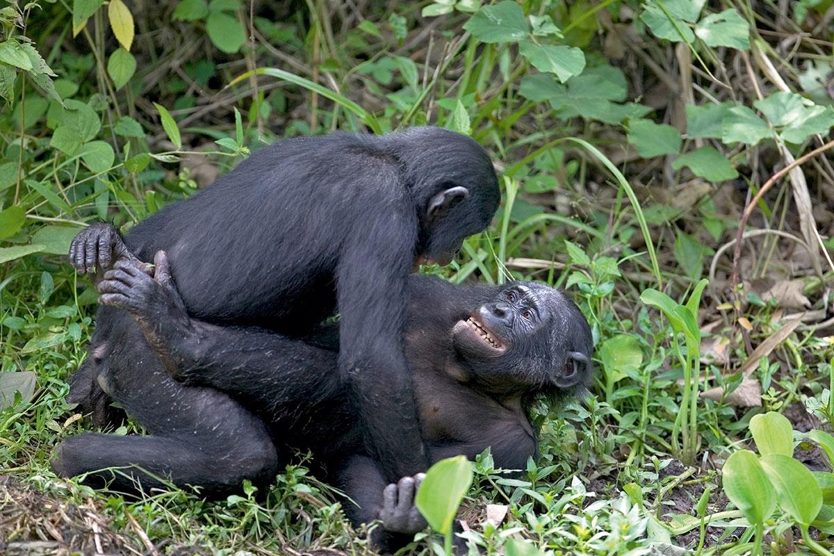 dyr parrer sig
