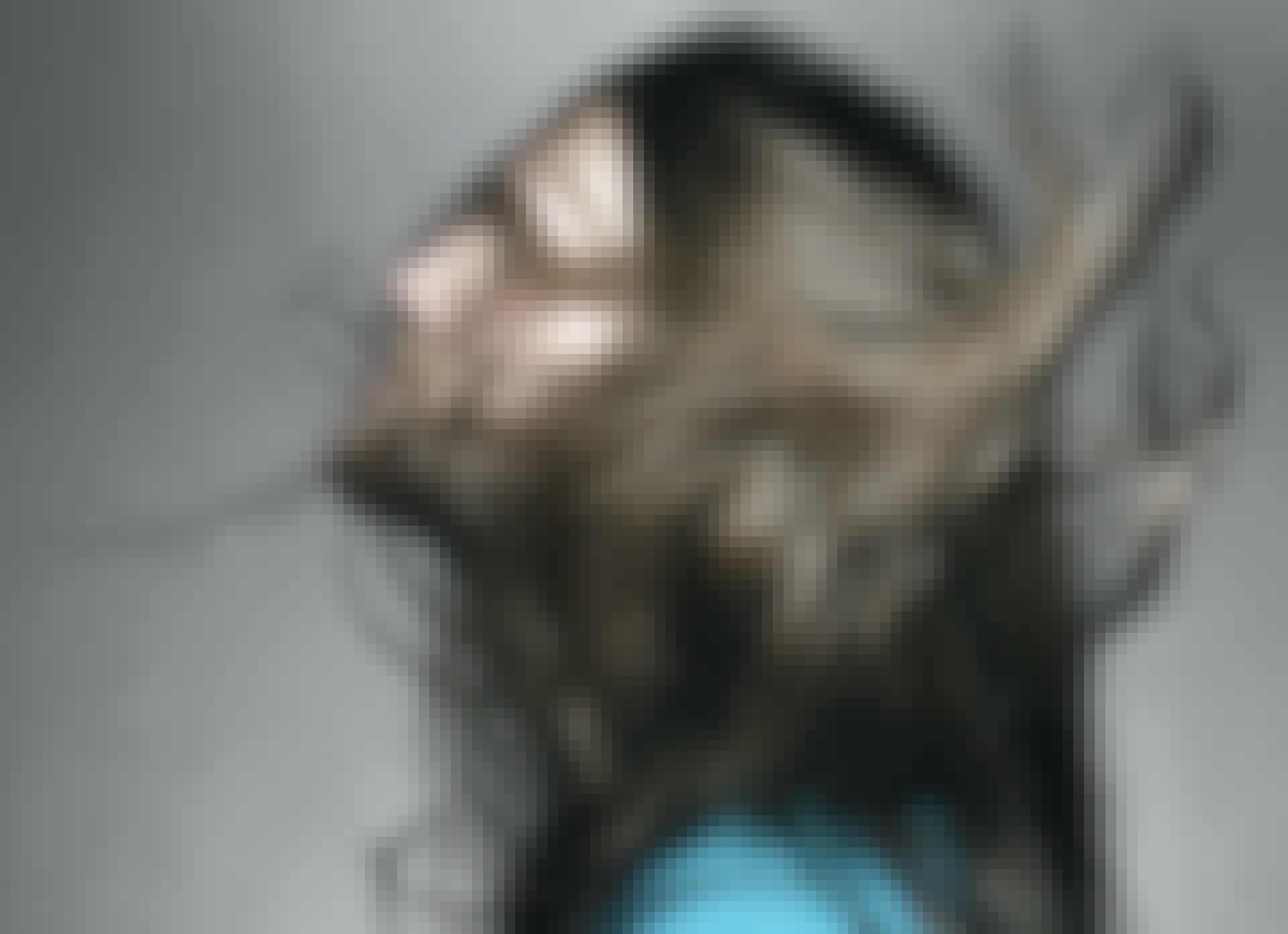 Hvorfor bliver hår på hovedet langt