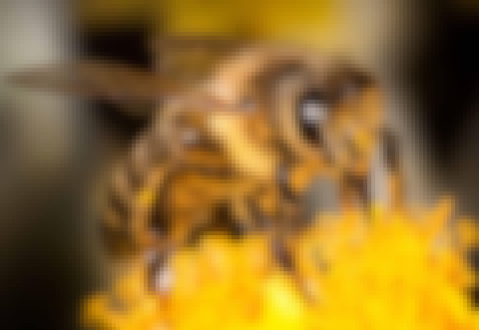 Bie suger honning fra blomst