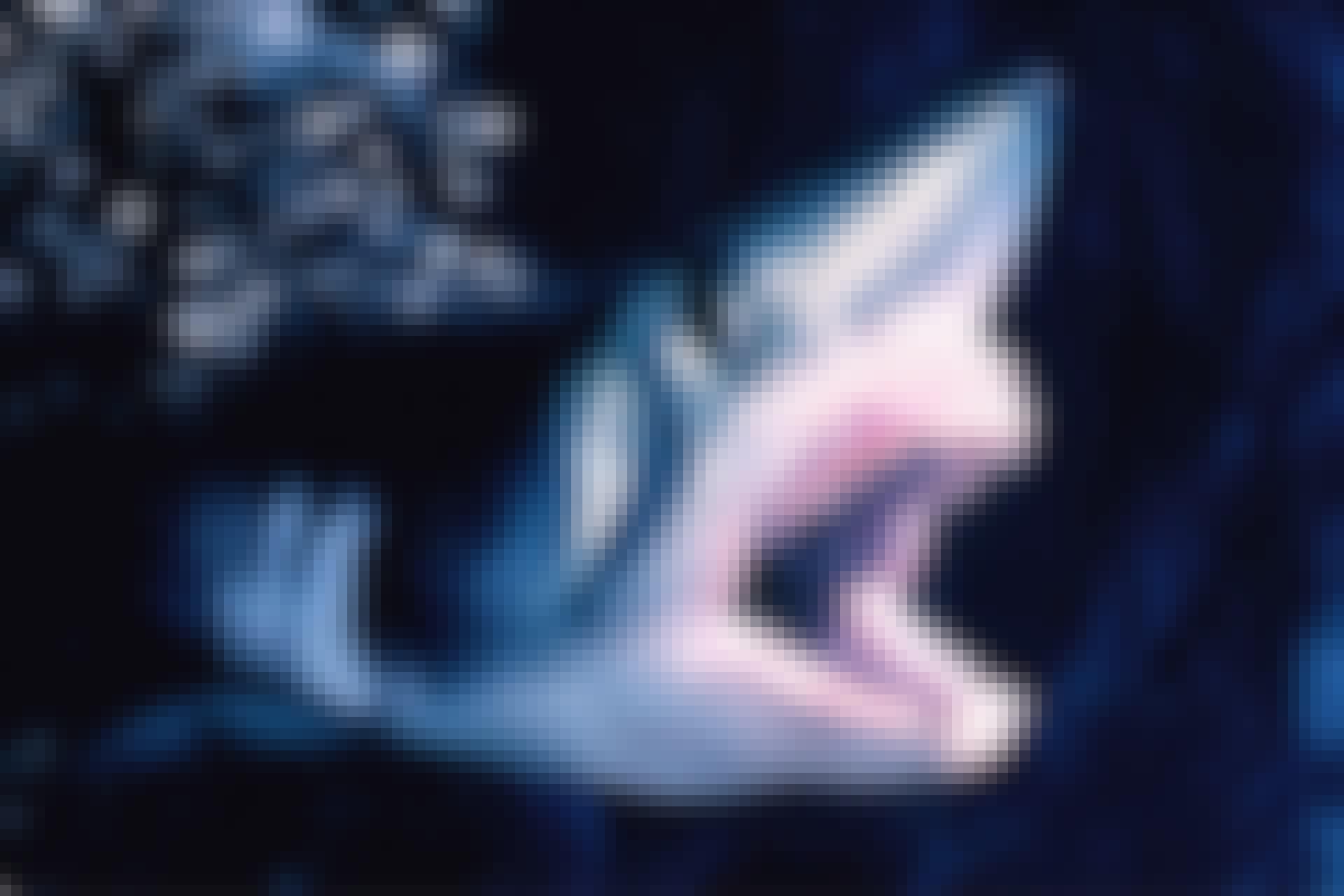 Hajer i Danmark sildehaj
