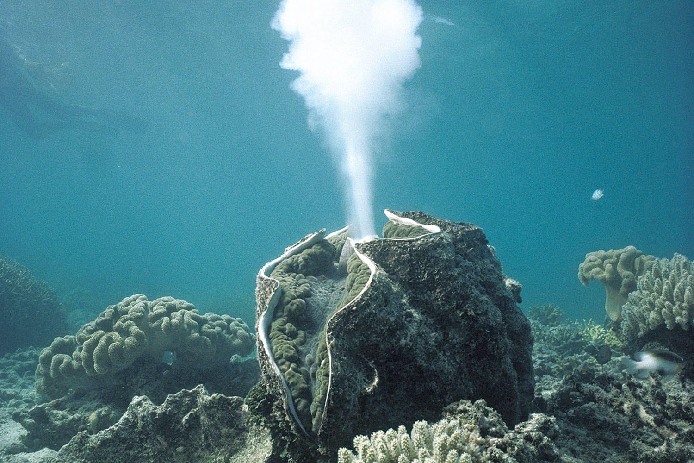 Hur parar sig musslor och sniglar?