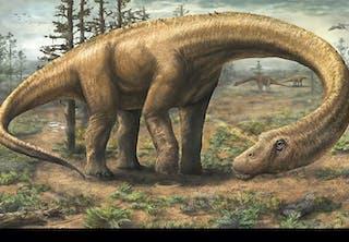Dreadnoughtus dinosaurie 1/2015
