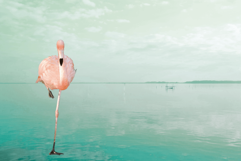 En flamingo på ett ben