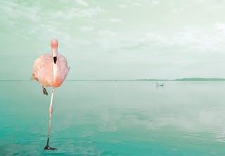 En flamingo på et ben