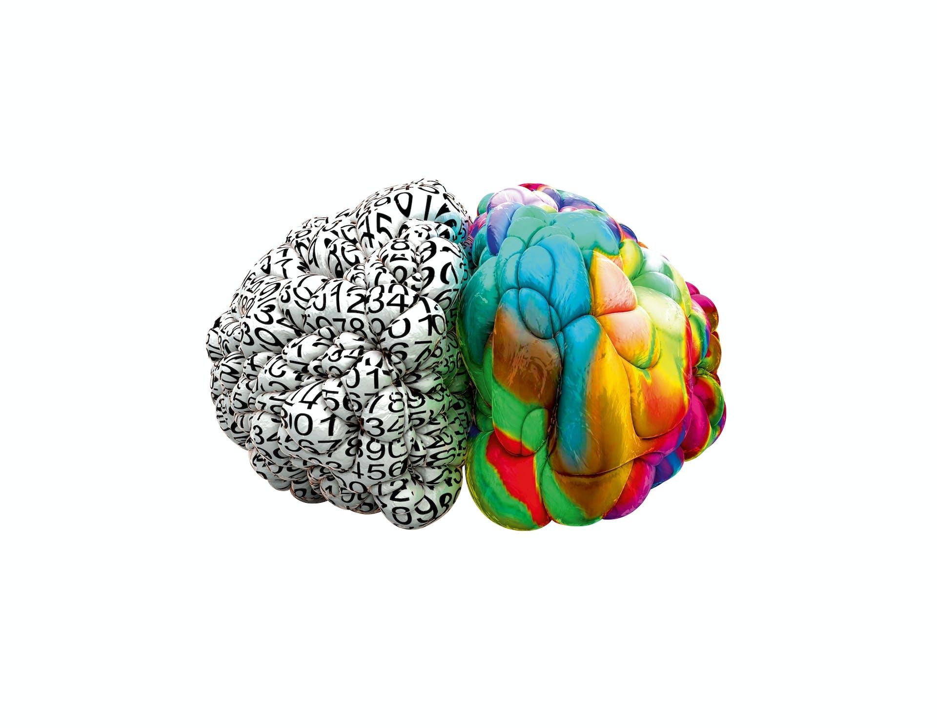 Hjernehalvdele
