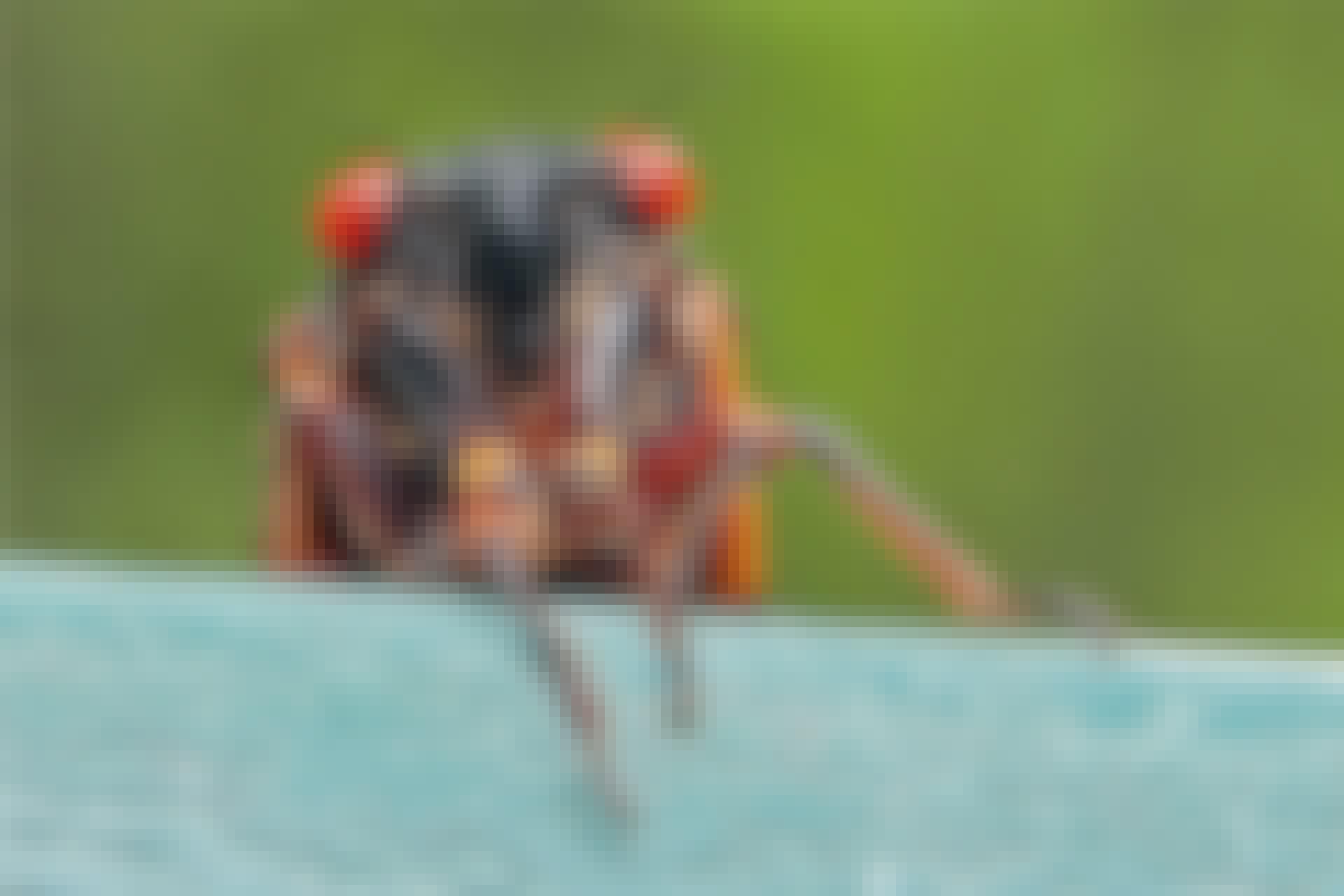bug cicada