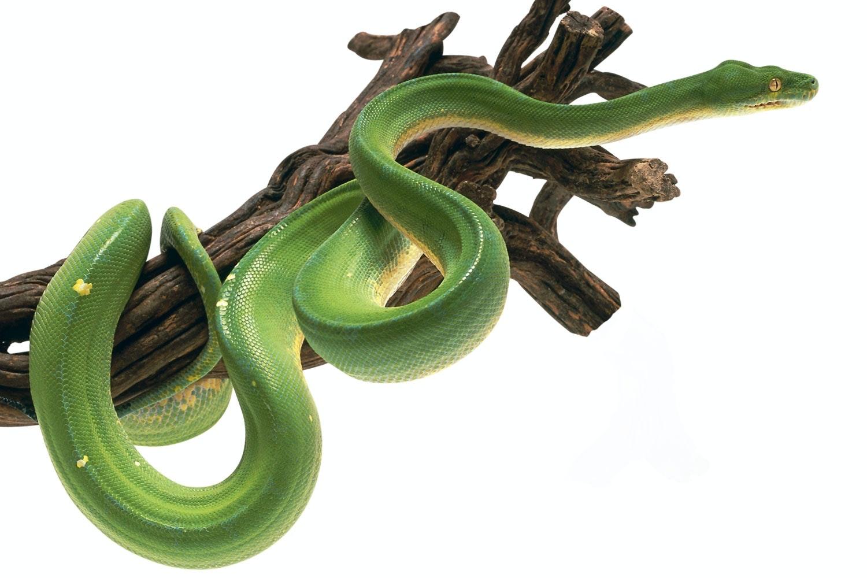 snake climbing
