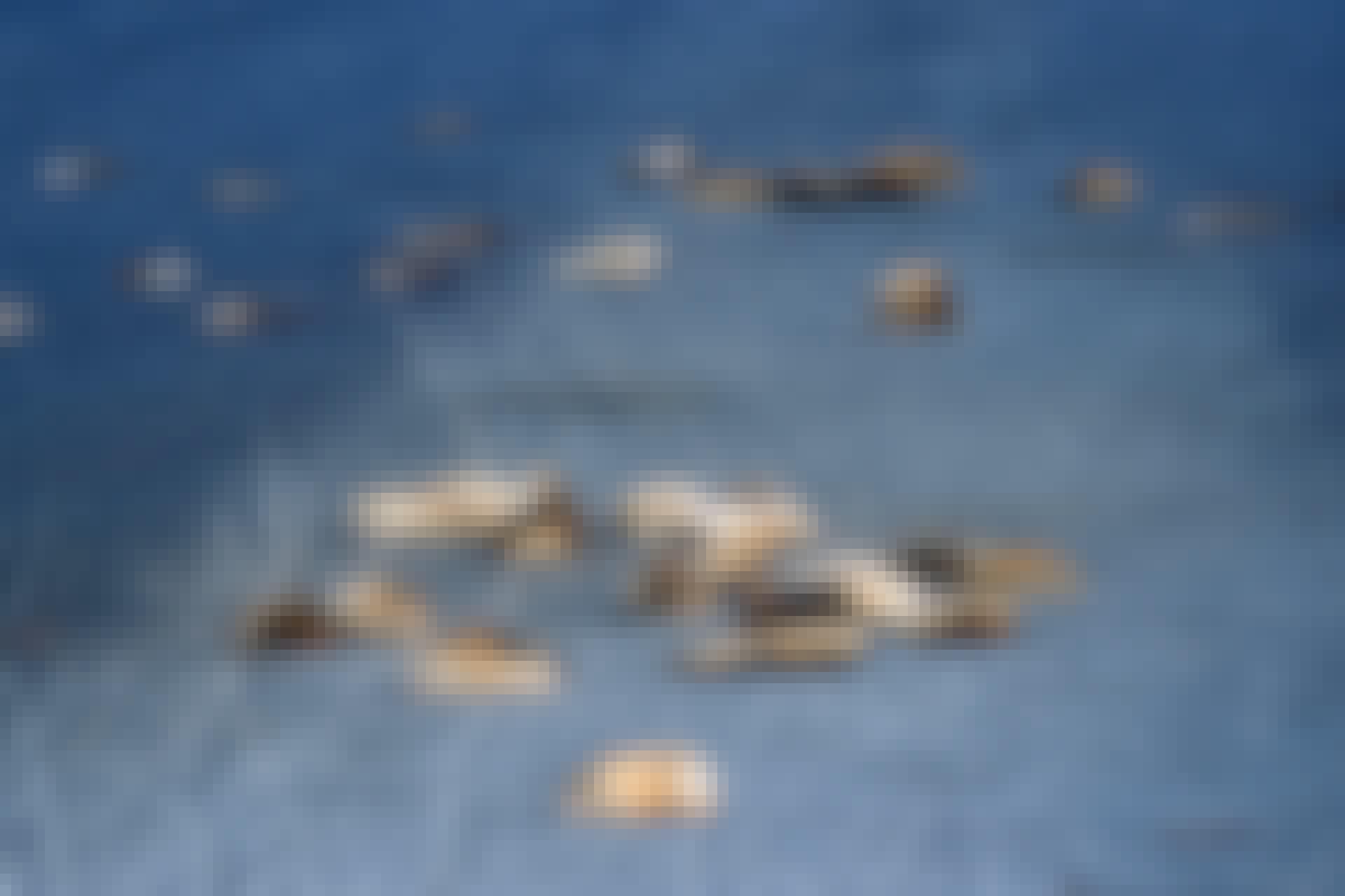 Lemmings dead on the road