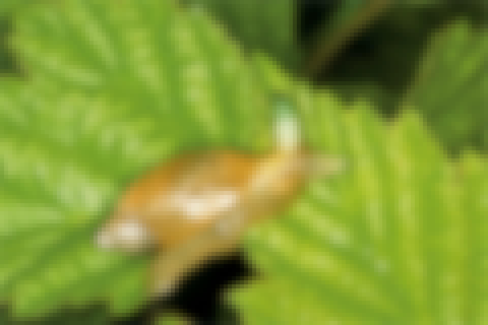 Snail parasite