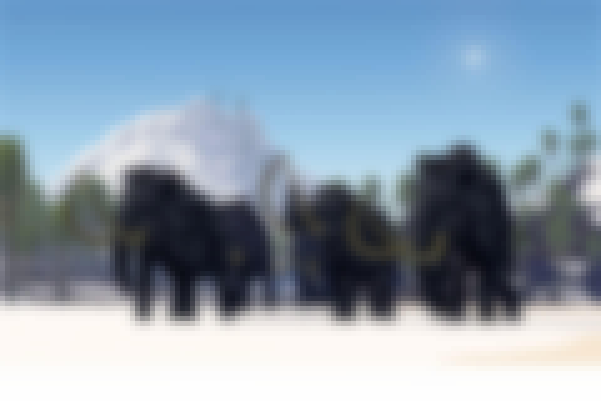Mammuts into mini