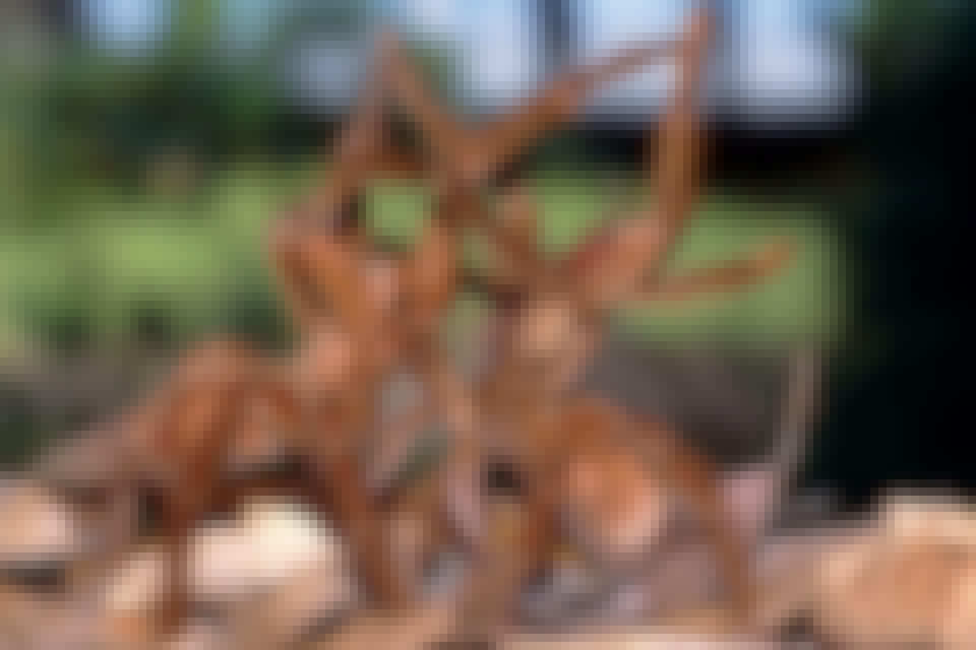 Theraphosidae