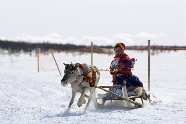Sami with reindeer sled