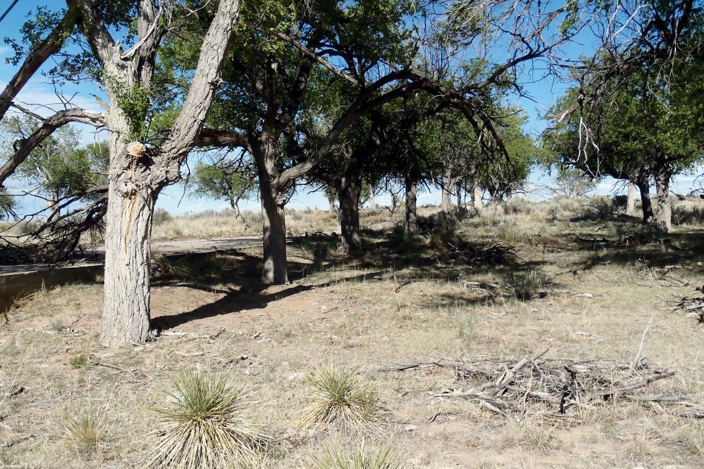 Camp Amache 2012