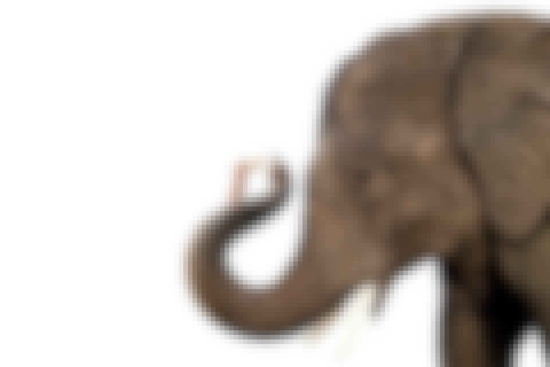 Mouse feeding elephant