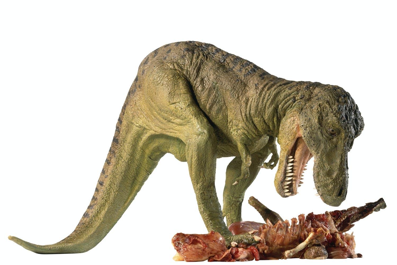 T Rex eating