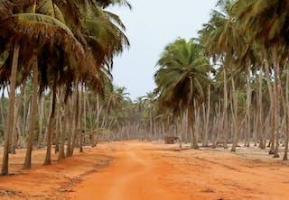 Tropic red dirt