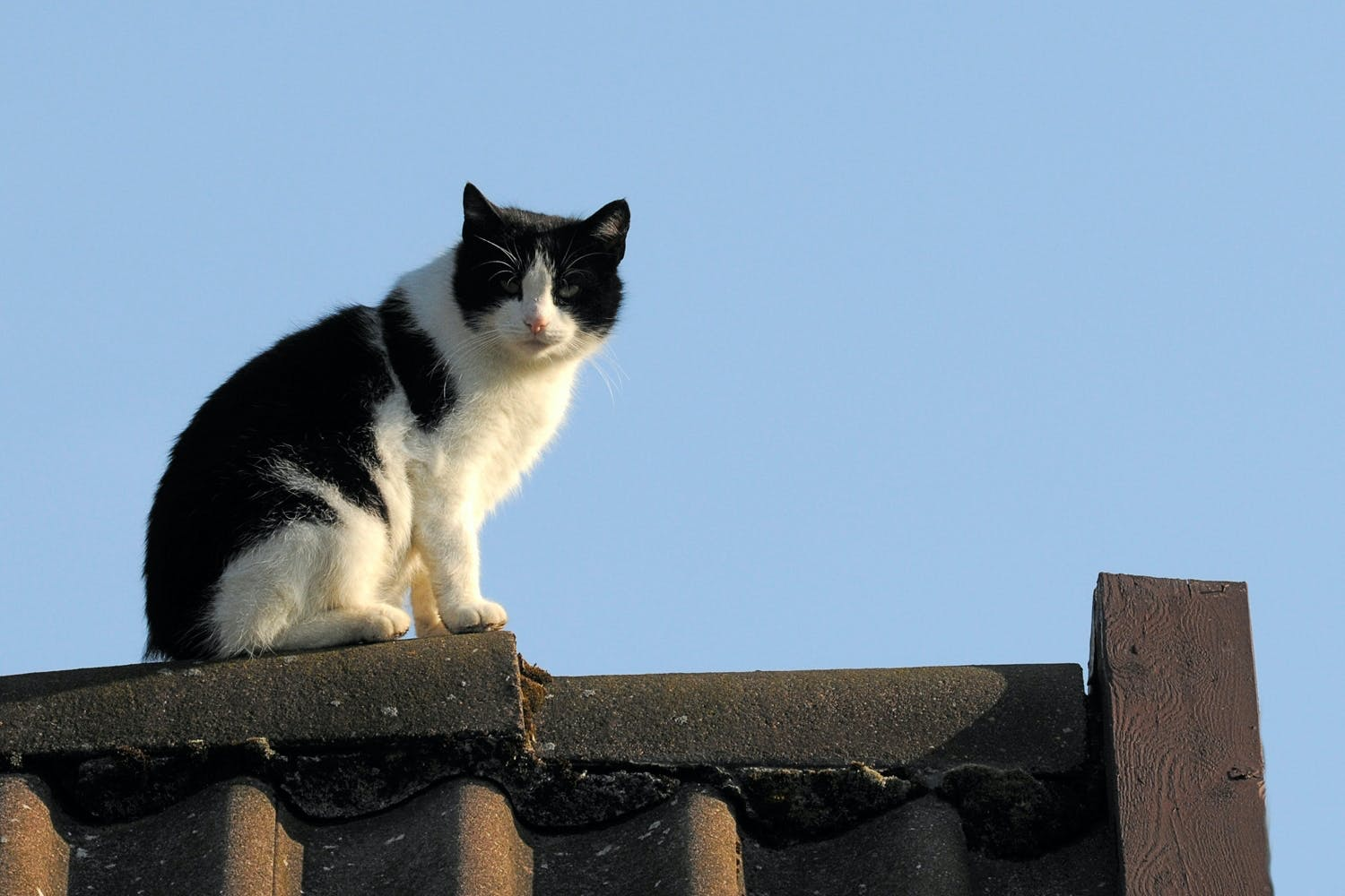 black and white cat on fence