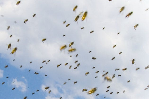 Bees in the sky