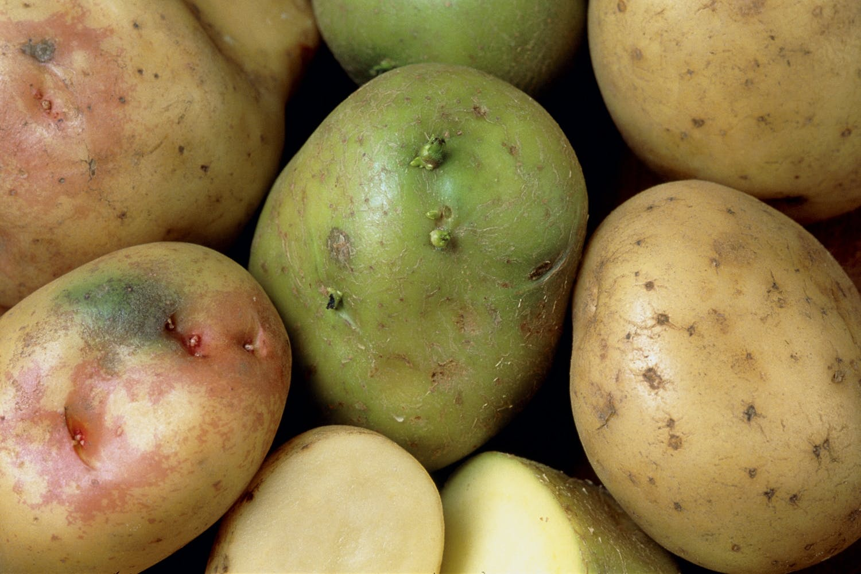 grønne kartofler