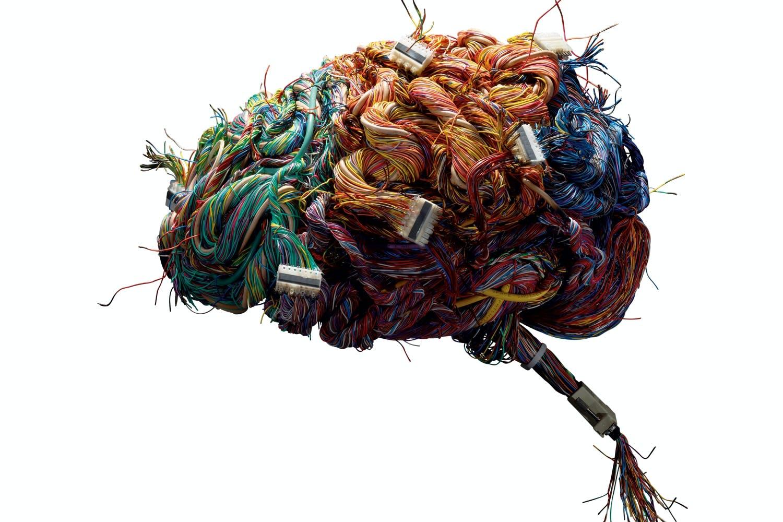 Hjernetema