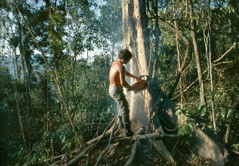 Lumberjack in jungle