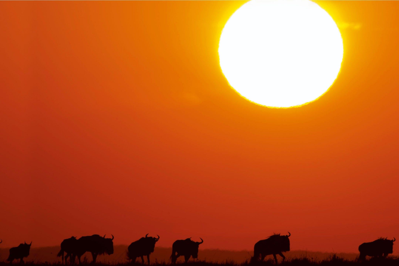 Sun and buffalos
