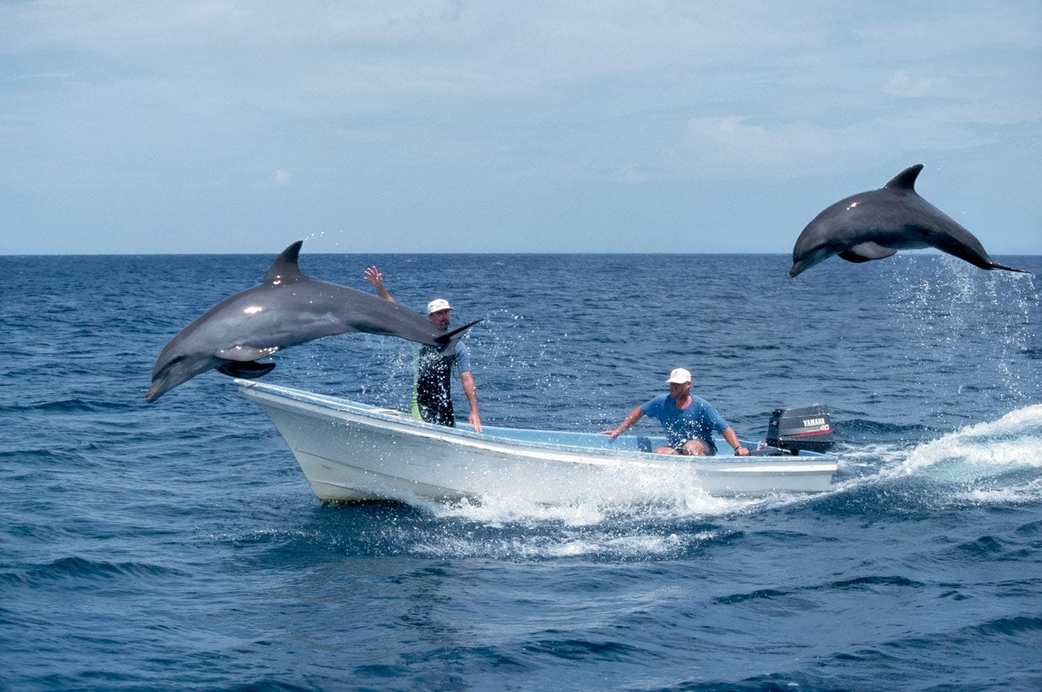 Dolphins playing with men in boat