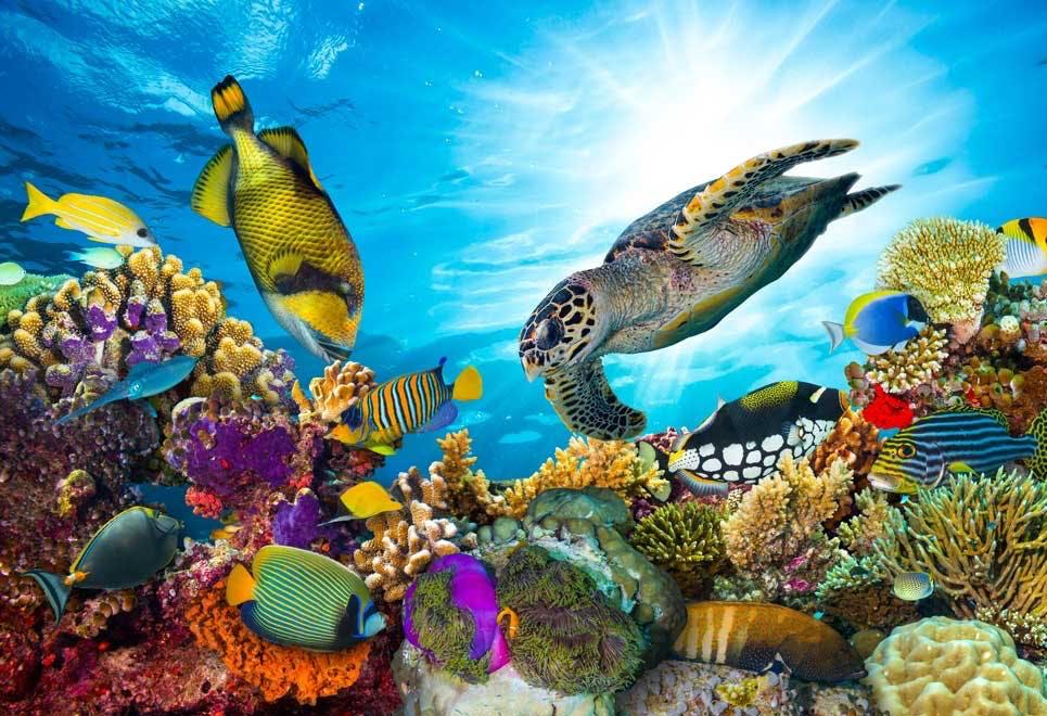Koralrev - Tsunami