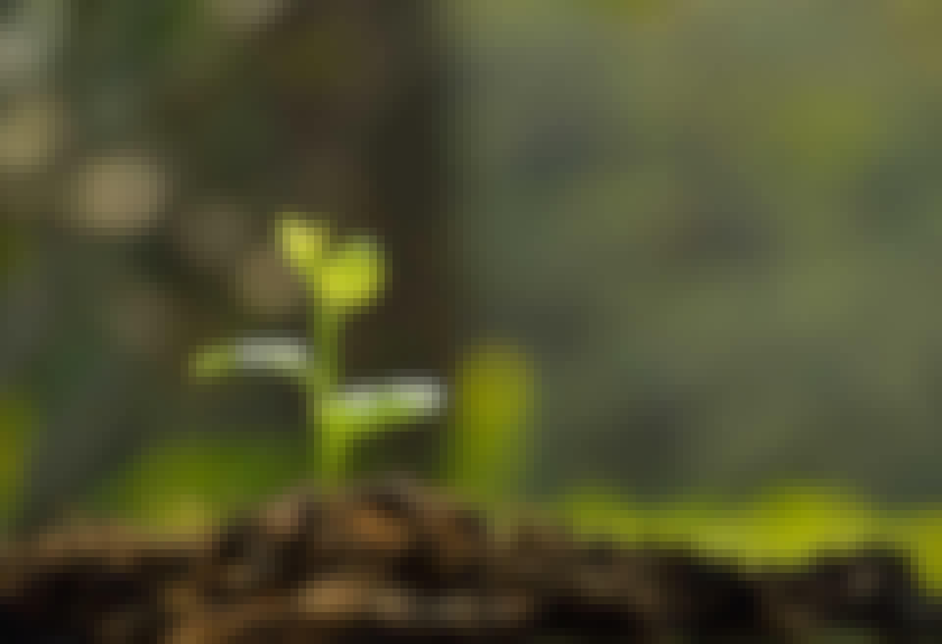 Fotosyntese - plante