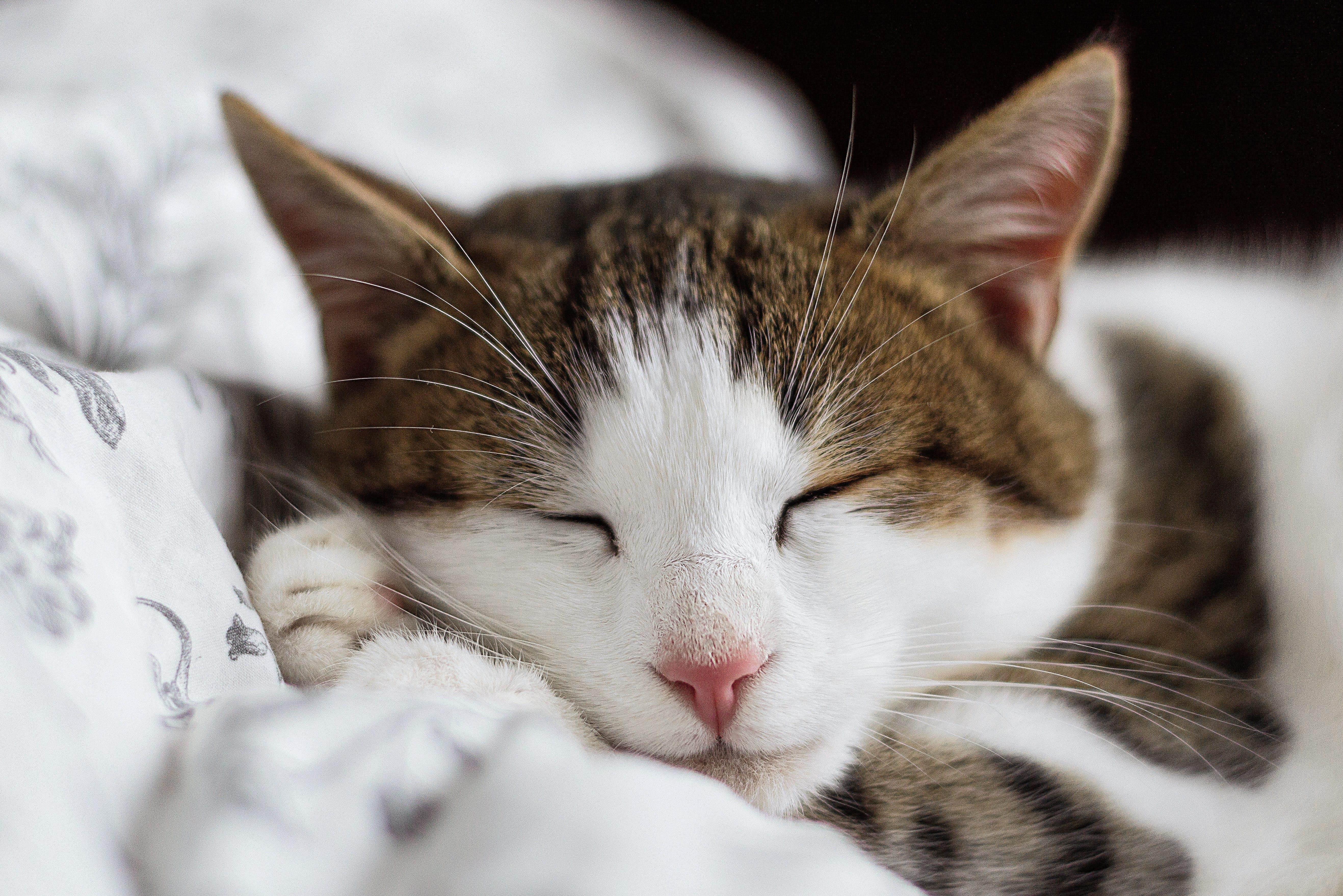 Rakastat kissoja