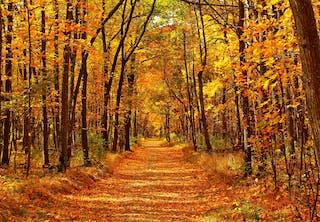 Seizoenen –Waarom bestaan er seizoenen?