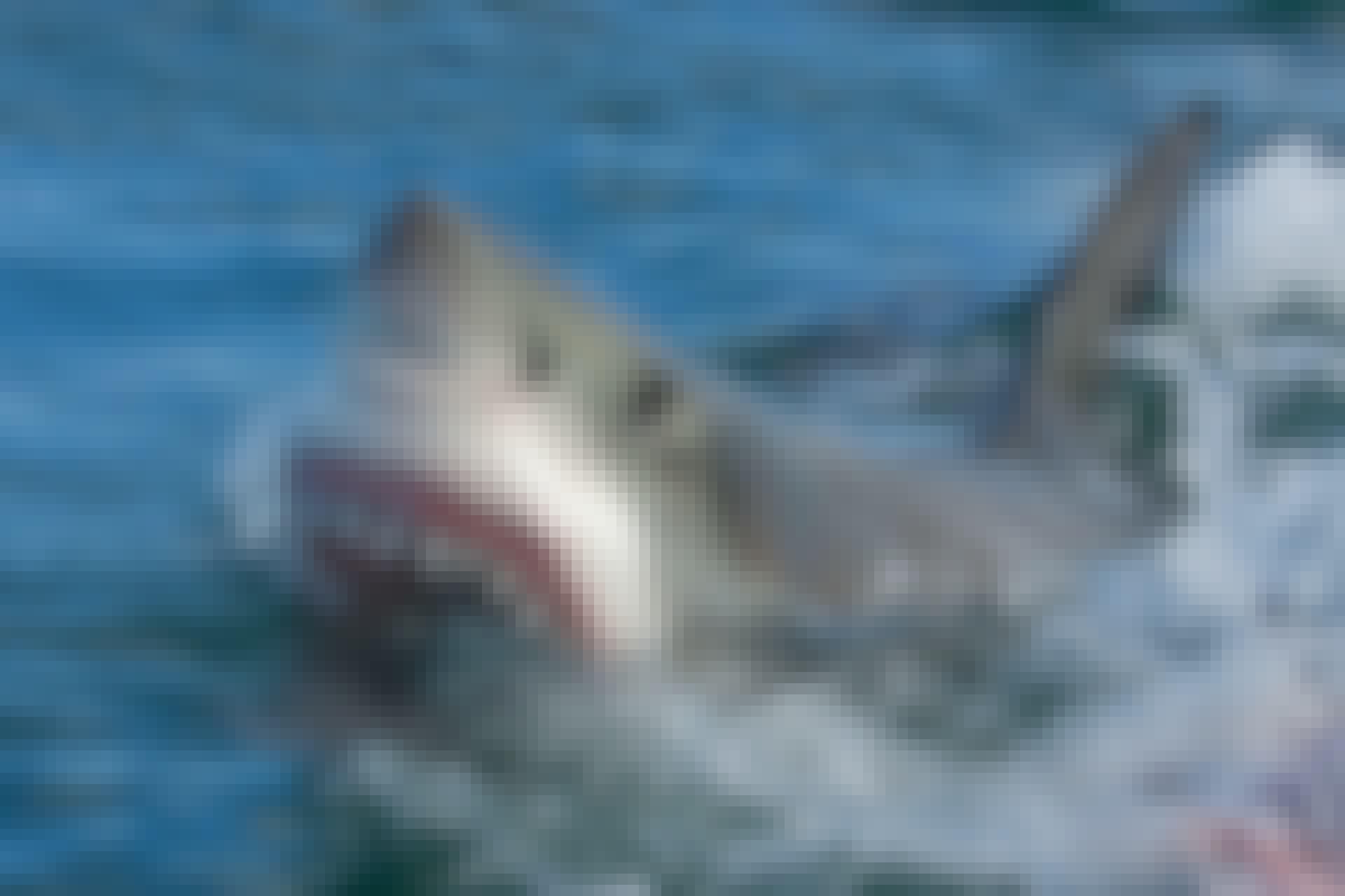 haai haaienaanvallen
