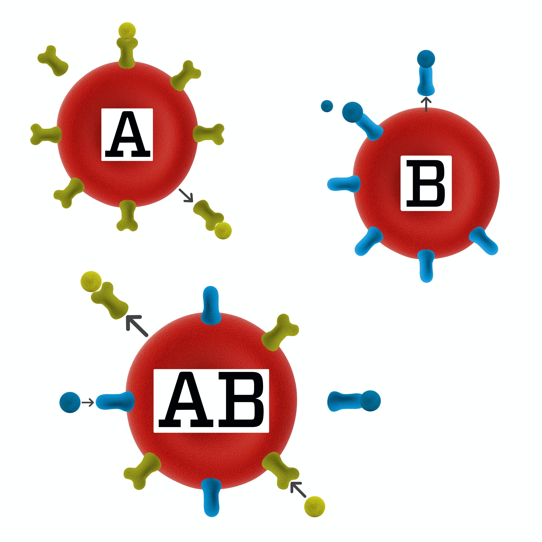Blodtyper