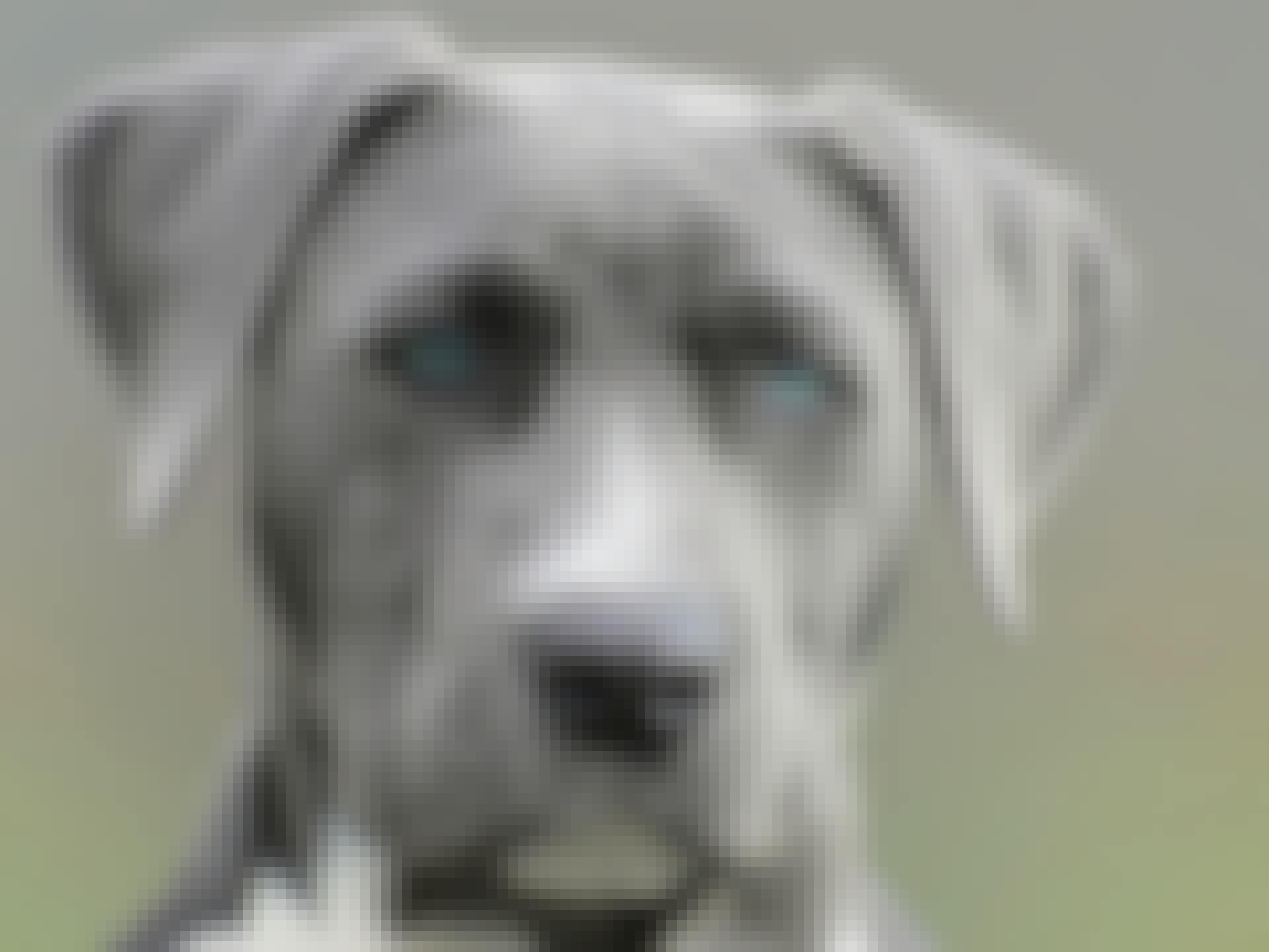 Klog hund
