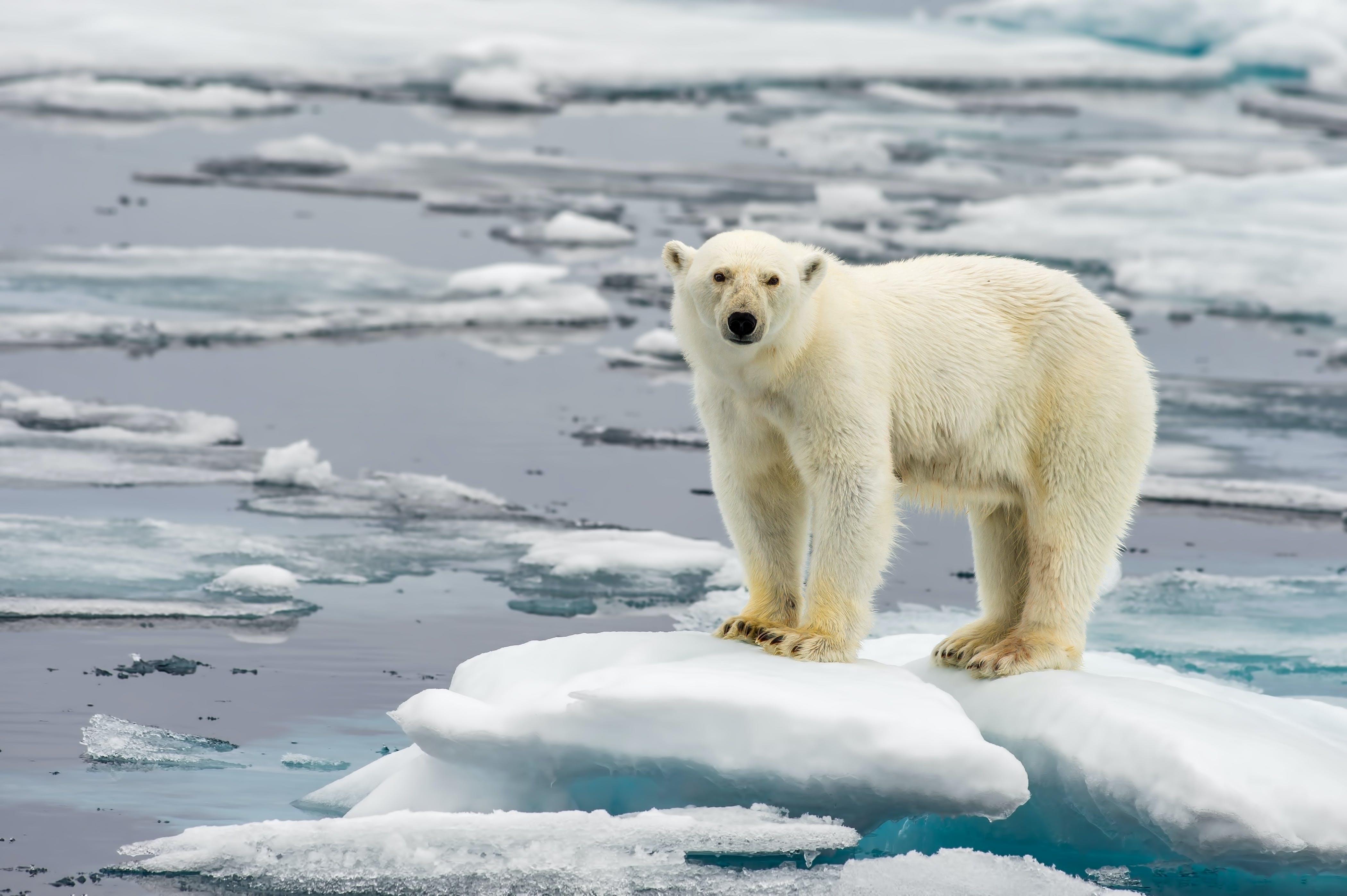 Ilmastonmuutoksen seuraukset