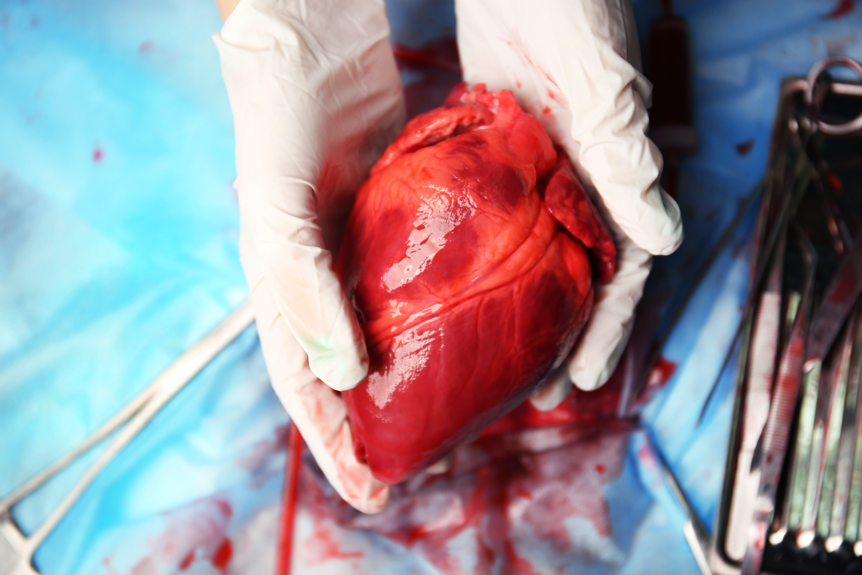 Hjärtmyter