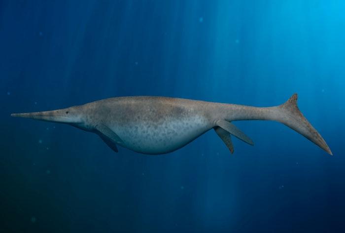 Maailman suurin eläin