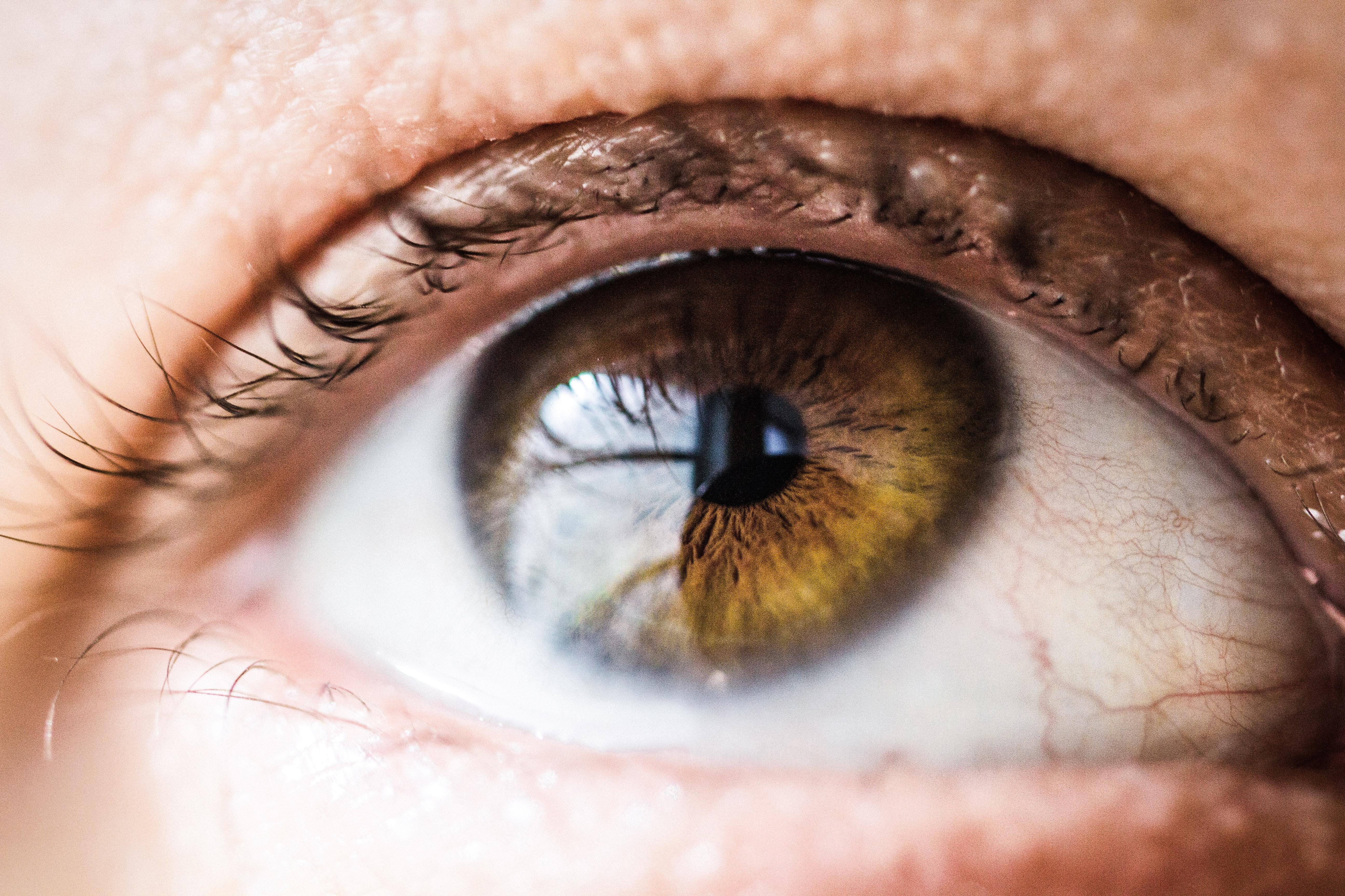 to brune øjne tekst