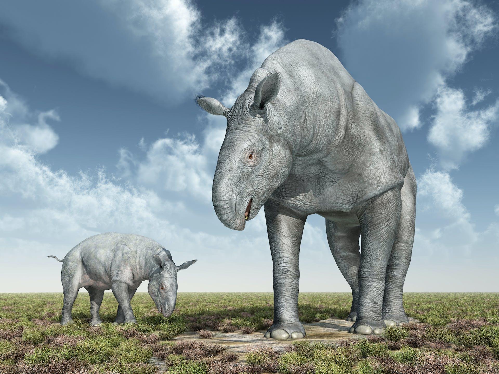 Verdens største dyr